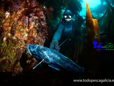 SPEARFISHING IN THE KELP