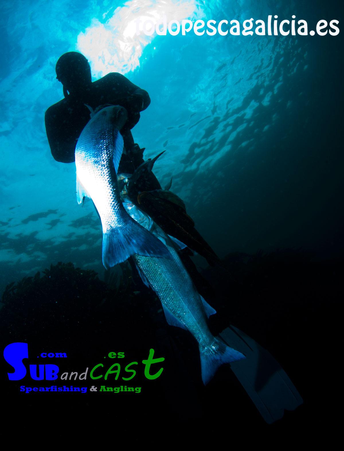 robalos-debajo-del-agua