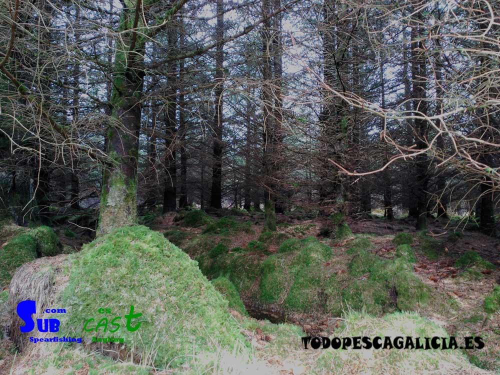 es curioso ver lo cerrados que están los bosques aquí, siendo imposible caminar por el medio de los árboles.