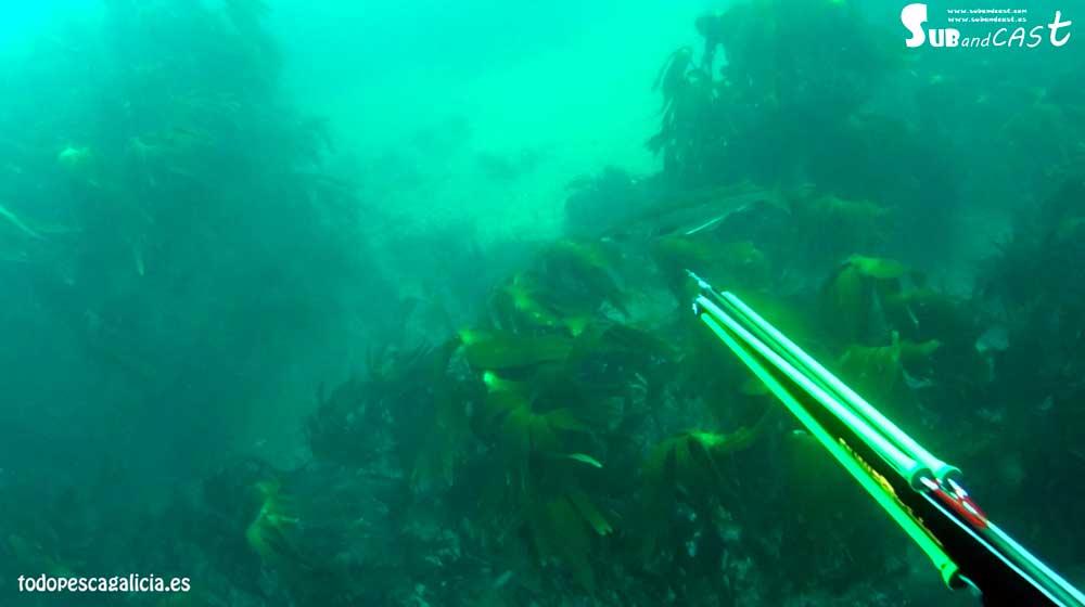 spearfishing pollock in Cork