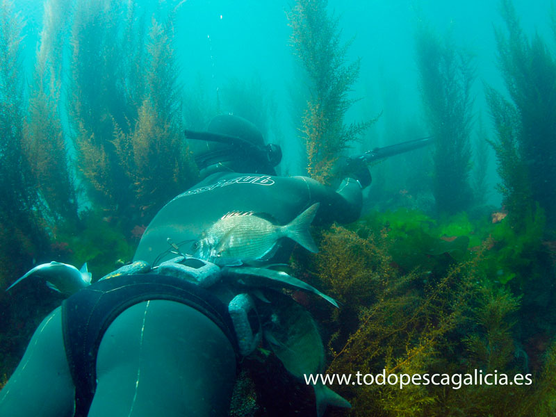 Bottom hunt spearfishing