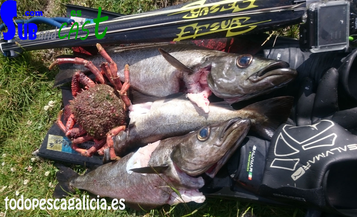 Pesca-1