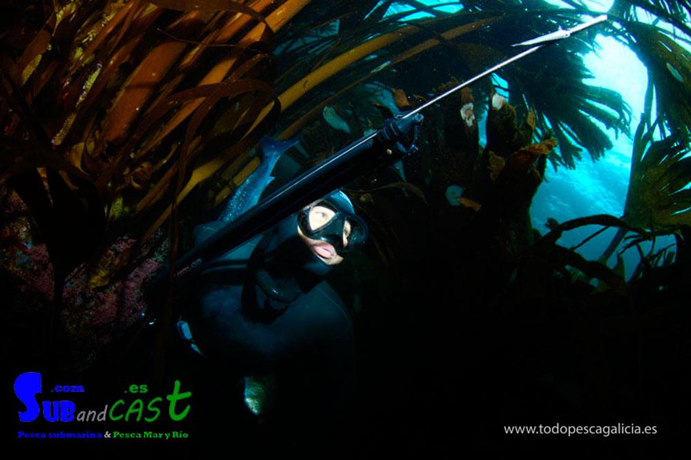 Cuando pescamos entre el alga solemos ir por una zona más oscura en la que se nos ve menos. Cuando están ahí los sargos o los robalos vemos su lomo oscuro y son difíciles de localizar.