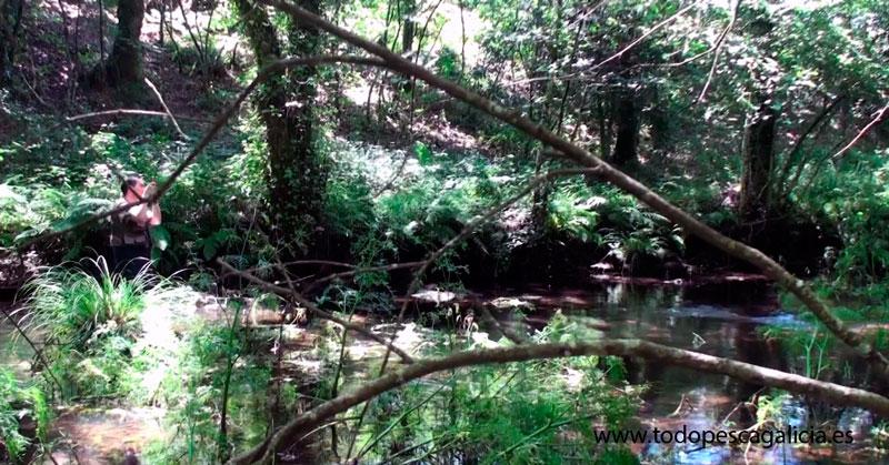 Zona de pesca de río El Pontepedra