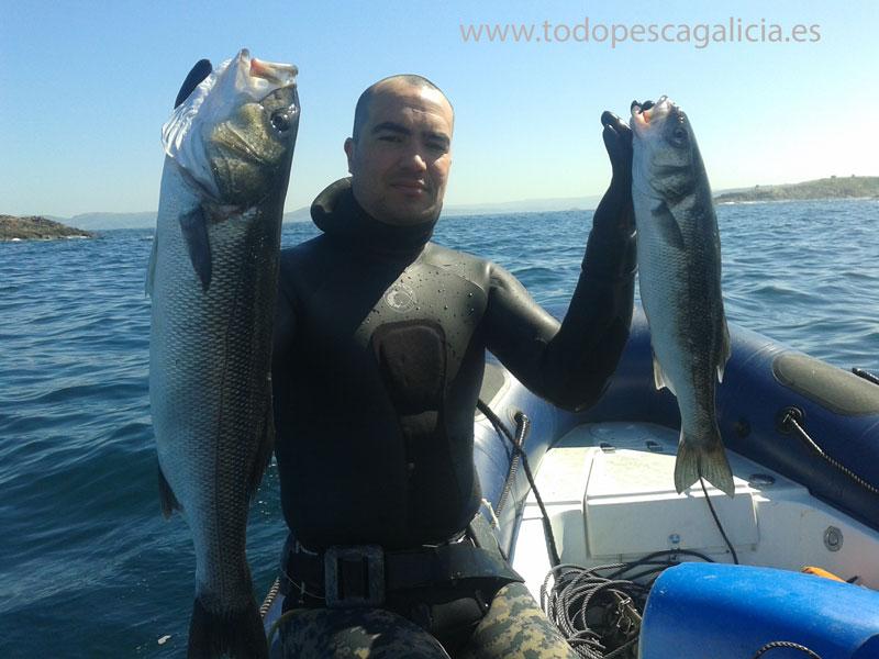 Pesca Submarina de la Lubina