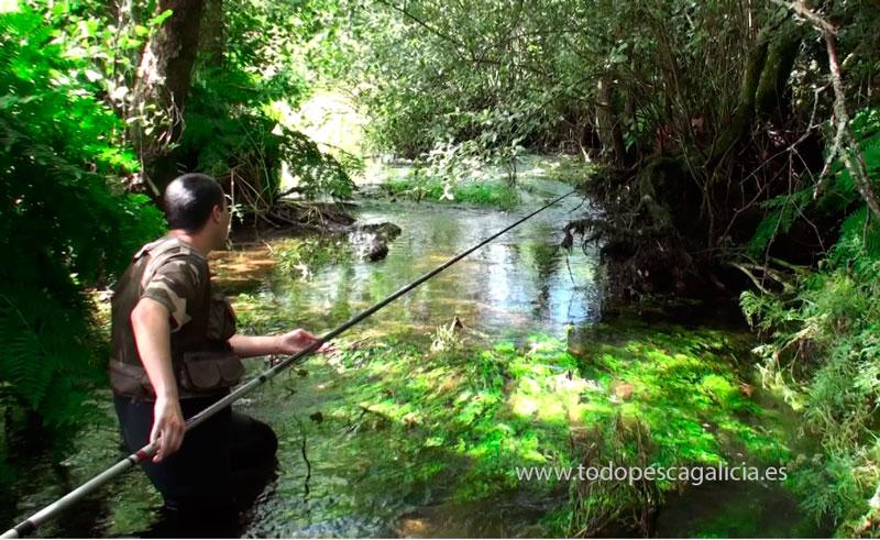 acción-pesca-fija