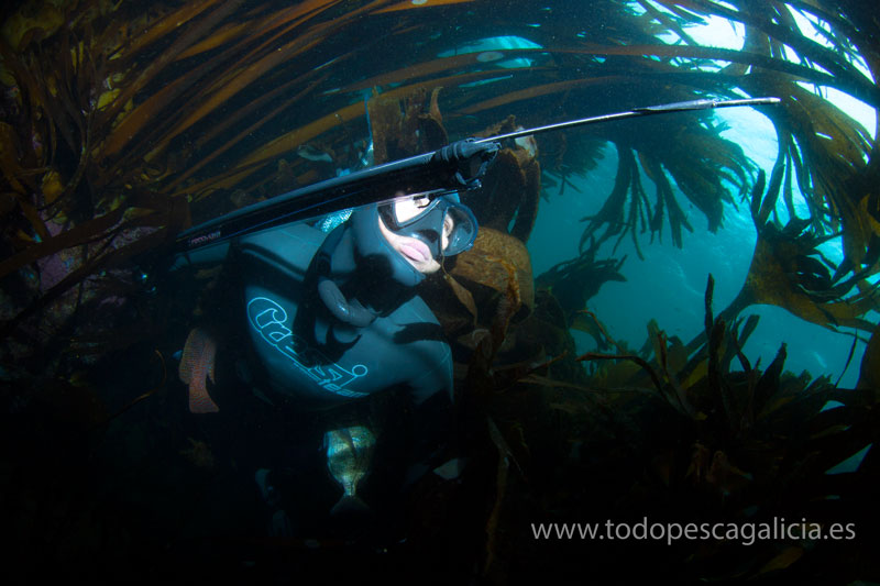 AMBUSH IN THE KELP